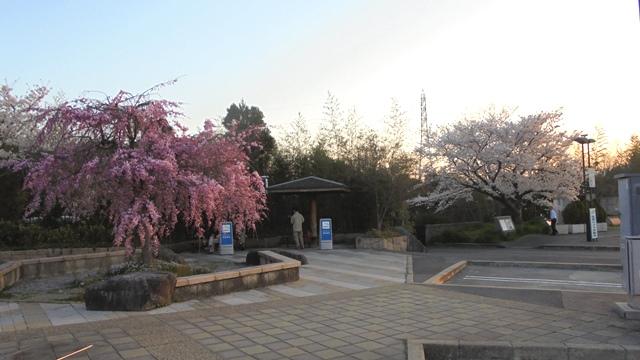桂パーキングエリア2.jpg