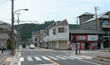 南淡路水仙ライン1.jpg